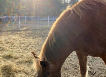 Assistant Barn Manager