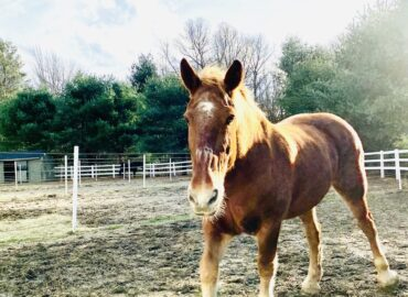 Part-time Assistant Barn Manager